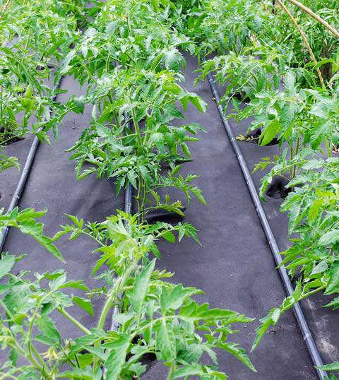 Where to buy weed control cloth?