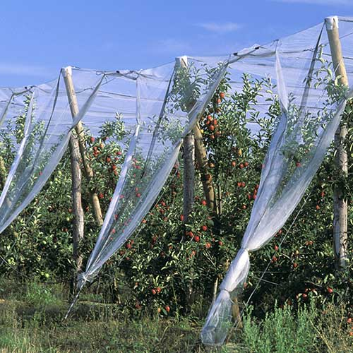 anti-insect net