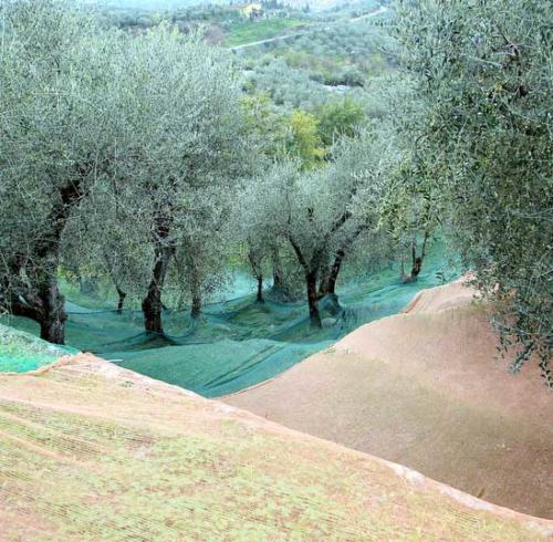 olive-nets