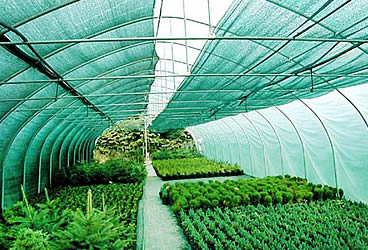 vegetable-green-shade-netting