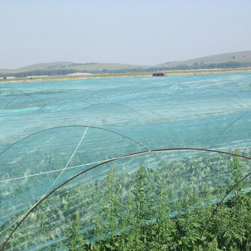 Anti-insect nets